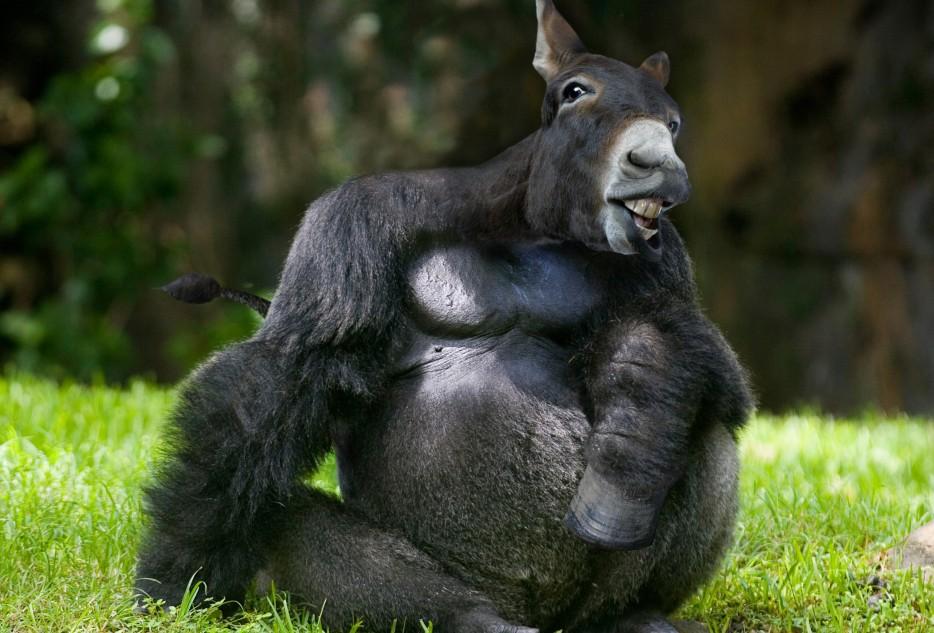 Прикольные фотожабы животных