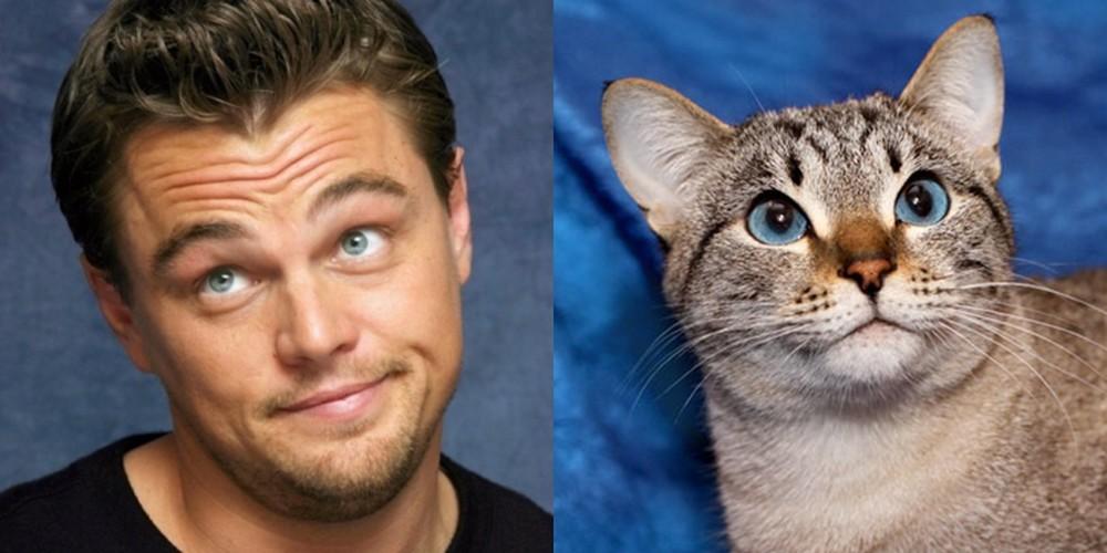 сходство кошек и животных фото следует