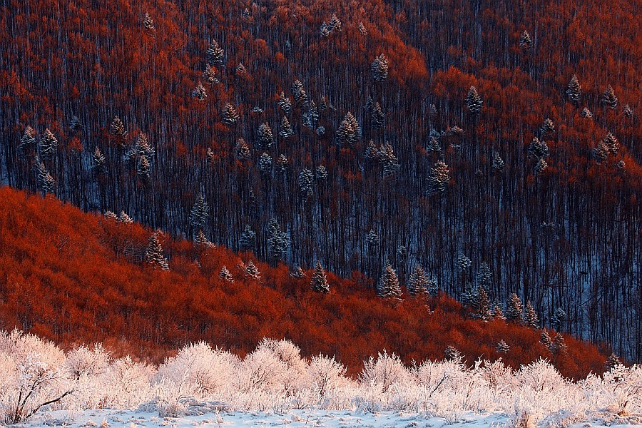 Лучшие работы фотоконкурса дикая природа россии