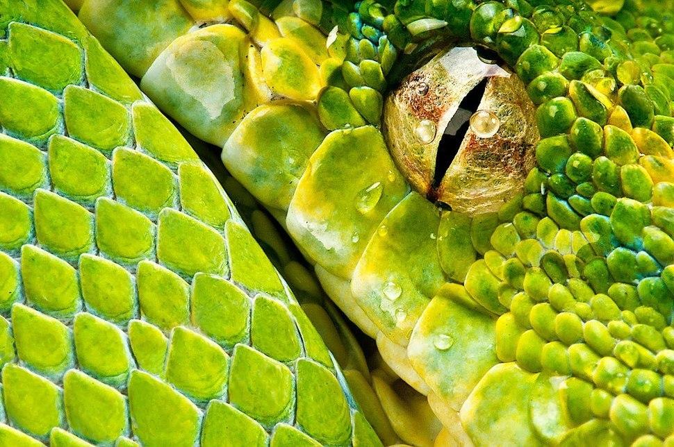 мир фото макросъемка змеи декабриста довольное легкое