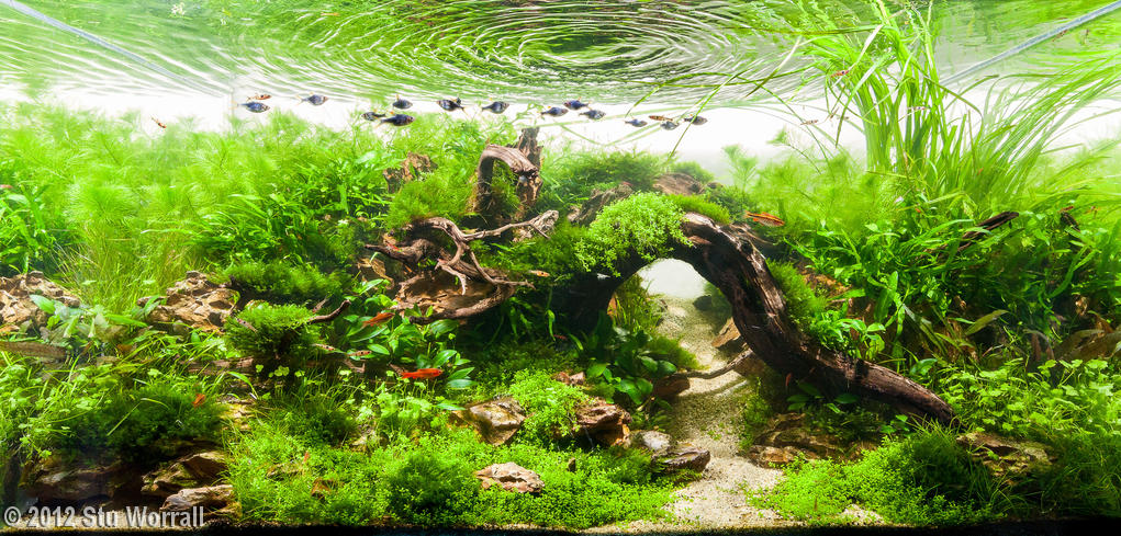 Aquascaping, ландшафт, дизайн, аквариум