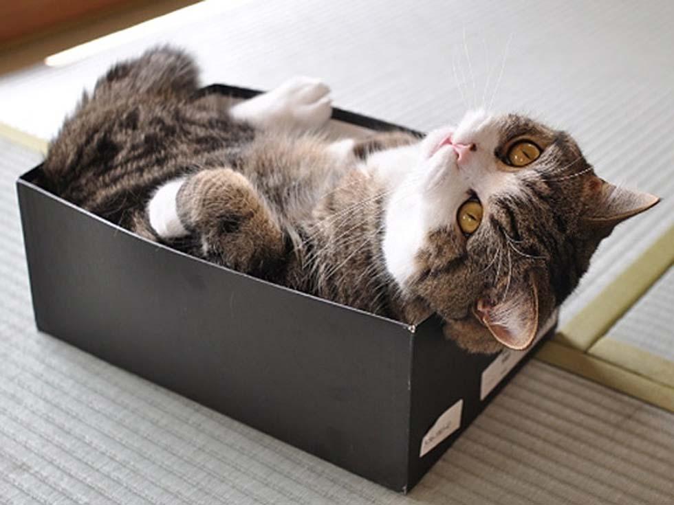 кошка в ящике картинки рожденного под