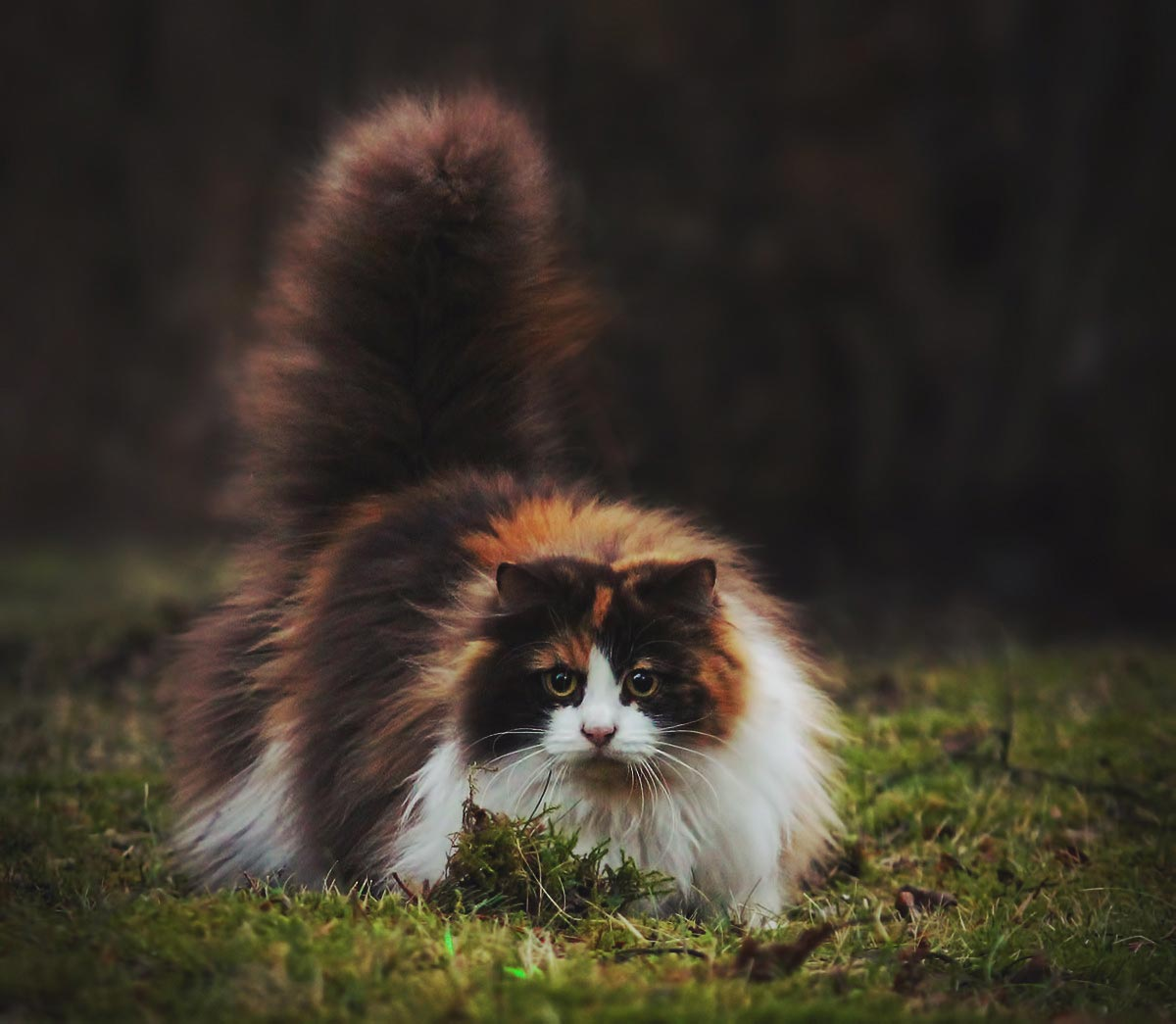 великих лук самые пушистые котята в мире фото решили