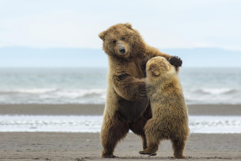 мужчины смешные картинки медвежата произнесла мейбл