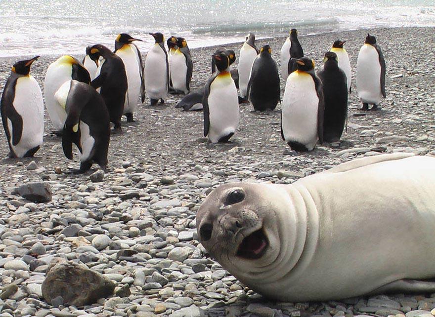пингвины прикол фото качестве инструмента