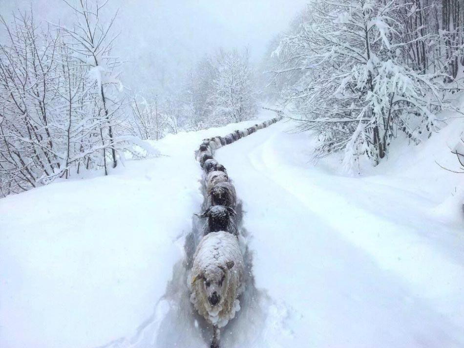Веселые фото про зиму