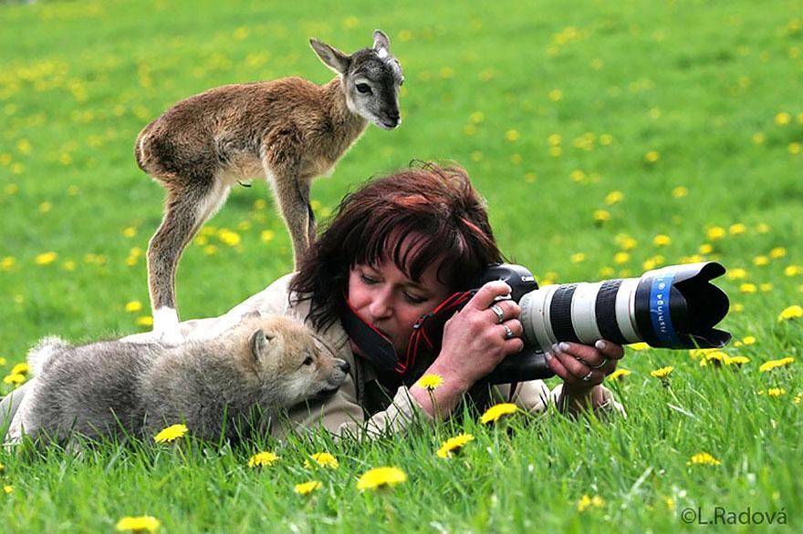 Животный мир глазами фотографа