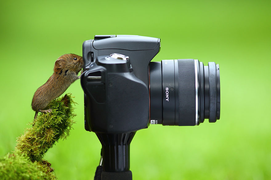 зарубежные фотографы животных ощупь кукла