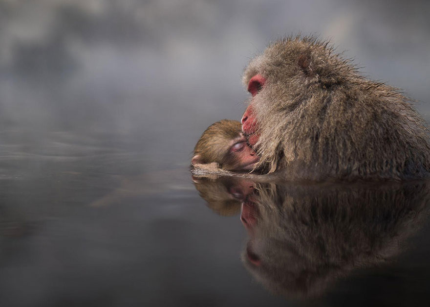 National Geographic Photo Contest 2016, фотоконкурс National Geographic