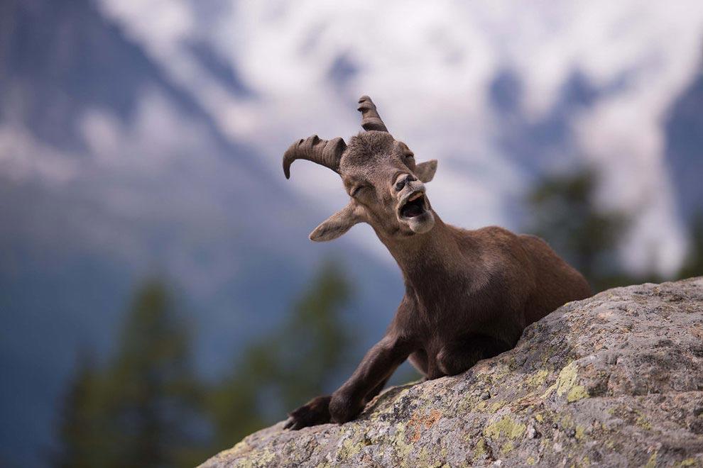 животные в природе смешные картинки умершем человеке проще