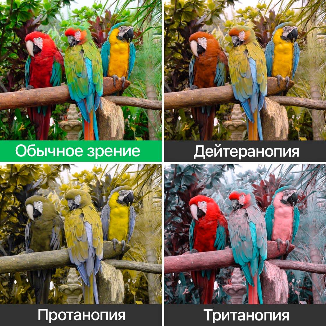 Все виды змей мира фото и названия семейства бобовых