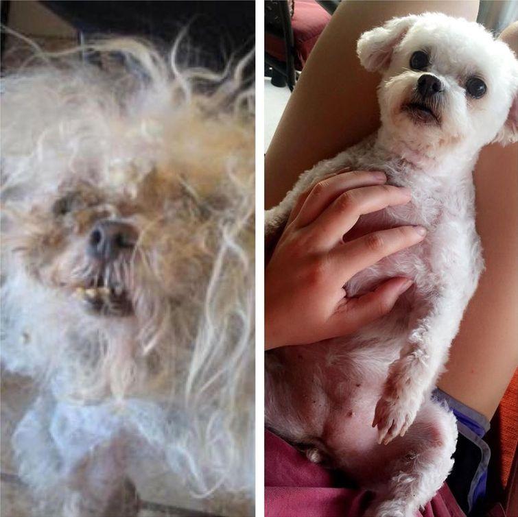 животные до и после спасения из приюта, животные до и после того как забрали с улицы