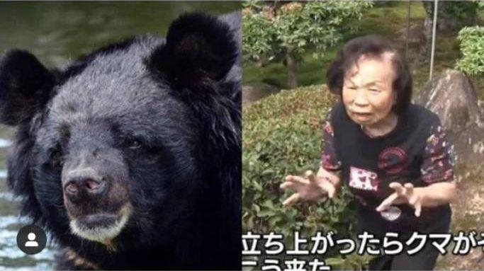 женщина боролась с медведем, женщина победила медведя