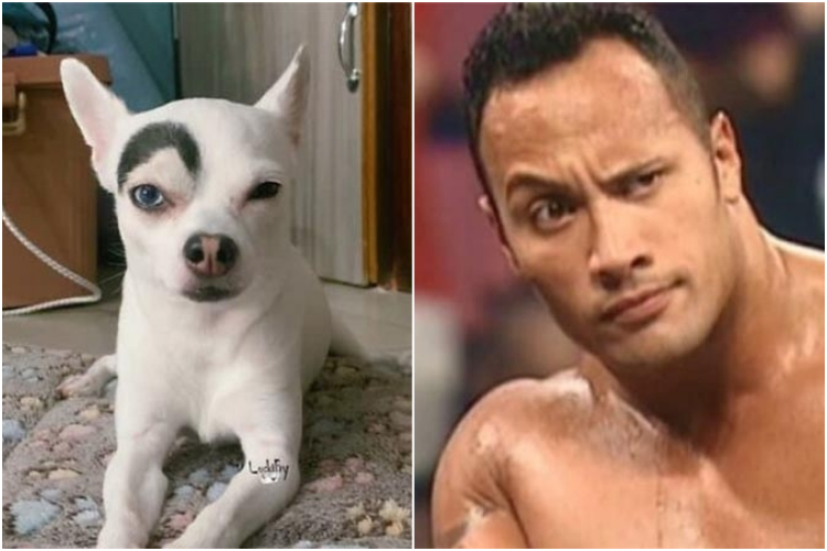 dogs-look-alike-challenge-vinegret-20