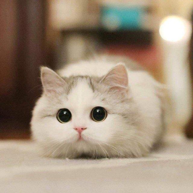 будет картинки котиков милых и няшных время