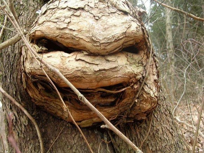 страшные деревья, смешные деревья, деревья похожи на нечто другое, странные деревья